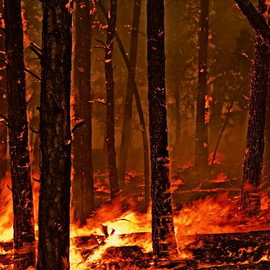 Рятувальники попередили про небезпеку пожеж в окремих областях України