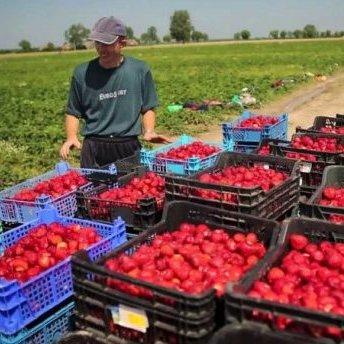 В Польщі ввели нові правила працевлаштування для українців