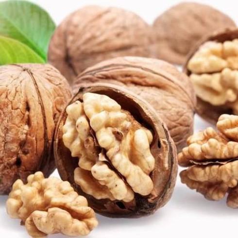 Ахметов і Новинський будуть вирощувати горіхи