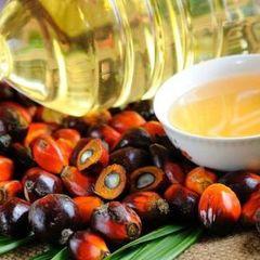 Учені довели, що пальмова олія провокує рак - вчені