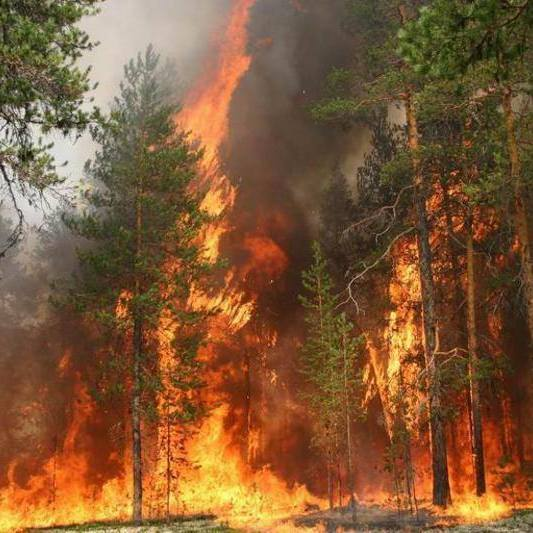 У зоні відчуження досі горить ліс