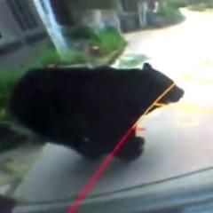 Американка зустріла ведмедя у власному гаражі (відео)