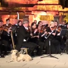 Лабрадор вийшов на сцену під час виступу Віденського оркестру та зірвав овації (відео)