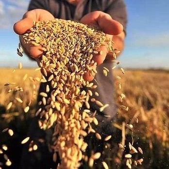 Українські аграрії встановили рекорд з експорту зернових