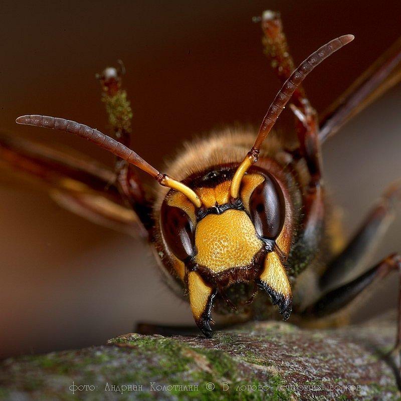 Медики застерігають про надзвичайну небезпеку від ос, бджіл, шершнів