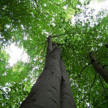 Зеленбудівці облаштували кольорові лунки навколо дерев (фото)