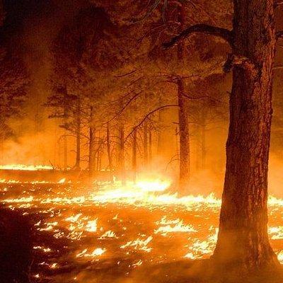 Масштабна лісова пожежа на Херсонщині. Як проходила ліквідація
