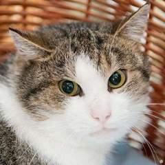 У Німеччині до суду викликали кішку, яка покусала сусідку своєї господині