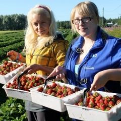 Українські заробітчани почали переказувати більше грошей