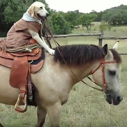 Техаський собака навчився їздити верхи