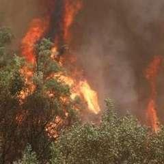 Чорногорія просить міжнародної допомоги у гасінні пожеж