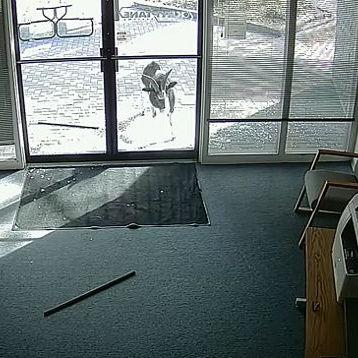 Як у Колорадо козел-хуліган двічі розбив двері офісу (відео)