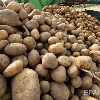 Білорусь придбала 95% усієї експортної картоплі з України