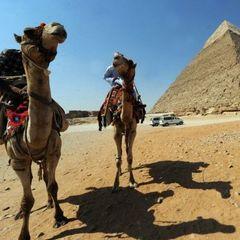 Шість одеських двірників розкішно відпочили у Єгипті (відео)