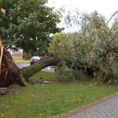 У Польщі пройшли урагани: Повалені дерева та підтоплено будинки