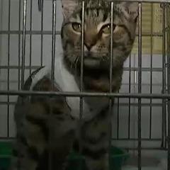Київського живодера, який знущався з кота, арештували