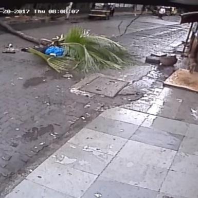 В Індії телеведучу вбило пальмою (відео)