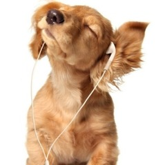 Німецьке радіо запустило радіостанцію для собак