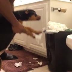 Господар змусив собаку зібрати розкидані шматки туалетного паперу (відео)