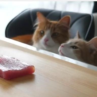 Японський шеф-кухар порадував котів курячими суші (відео)
