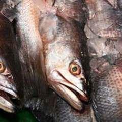 Під Києвом виявили 20 тонн тухлої риби