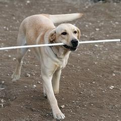 У Києві чоловіку отруїли його собаку-поводиря
