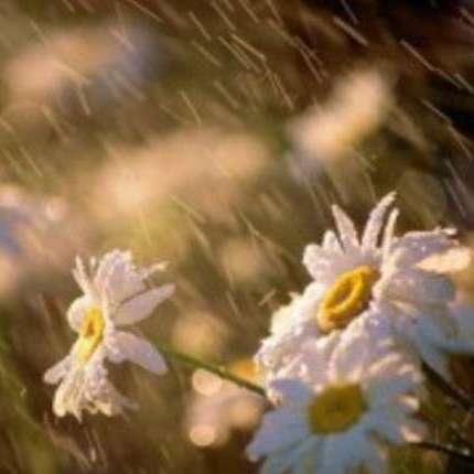 Погода на вихідні: у більшості регіонів України спаде спека і пройдуть дощі (карта)