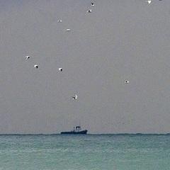 Біля окупованого Севастополя розбилося судно: невідоме місцезнаходження шести людей