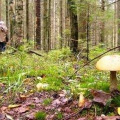 Медичні працівники надали список грибів, якими найчастіше отруюються в Україні