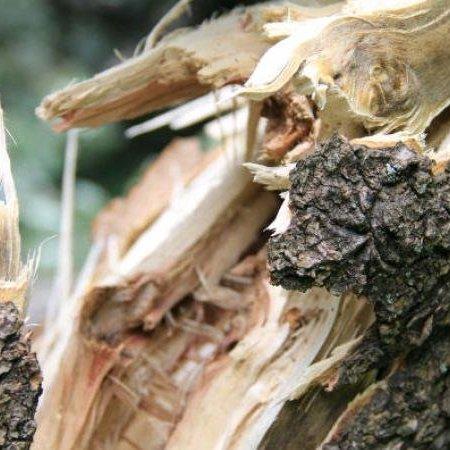 На Львівщині рубка лісу закінчилася смертю людини