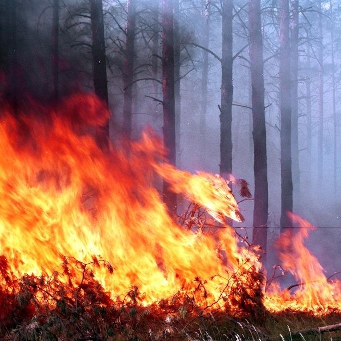 Масштабна лісова пожежа спалахнула на Одещині