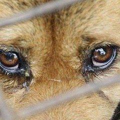В Україні набув чинності закон про посилення відповідальності за жорстоке поводження з тваринами