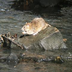 У водоймах Харківщини – небезпечна хвороба