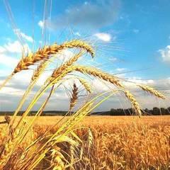 Українцям обіцяють осінь вже після 10 серпня