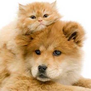 Пес і кіт «здали» судовим приставам свого господаря-боржника