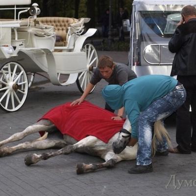 Поліція завела справу на власників коня, що впав в Одесі