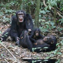 В Африці виявили новий вид смертоносної сибірської виразки