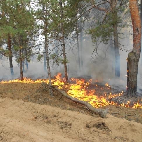 На Херсонщині горить 40 гектарів лісу