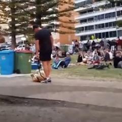 Пес, який відмовлявся йти з парку, викликав бурхливі овації (відео)