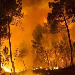 В Італії добровольці, які допомагали пожежникам, підпалювали ліс, щоб отримати роботу