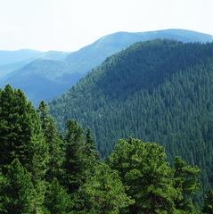 Масове нашестя шкідників знищує ліси України (відео)