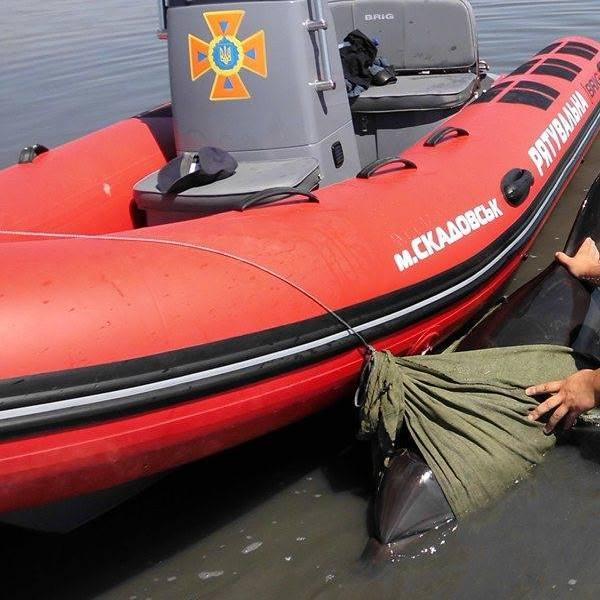 Херсонські рятувальники допомогли дельфіну