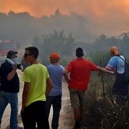 У Греції, Португалії та Франції знову спалахнули лісові пожежі (фото)