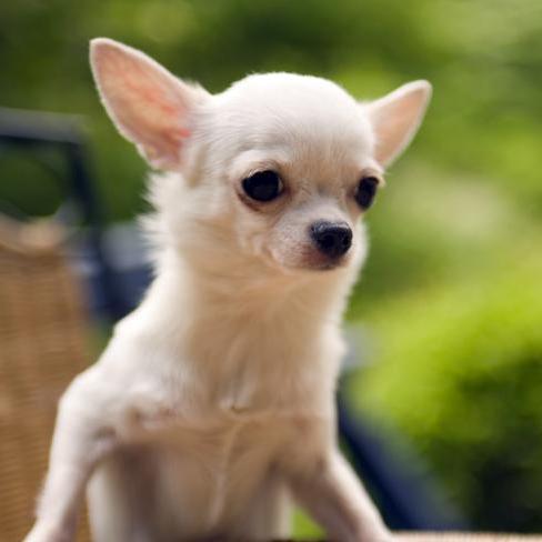 Італійка закрила собаку на терасі та поїхала у відпустку: тварина загинула
