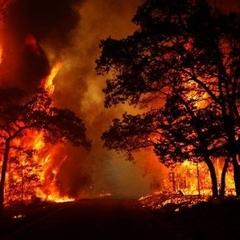 «Укрзалізниця» попереджає про затримку поїздів через лісові пожежі
