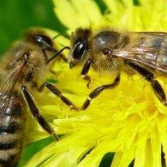 На Харківщині від укусу бджоли помер чоловік