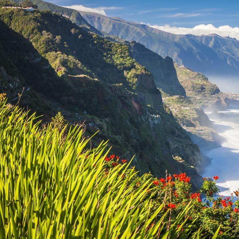 На острові Мадейра під час фестивалю впало 200-річне дерево: 11 загиблих