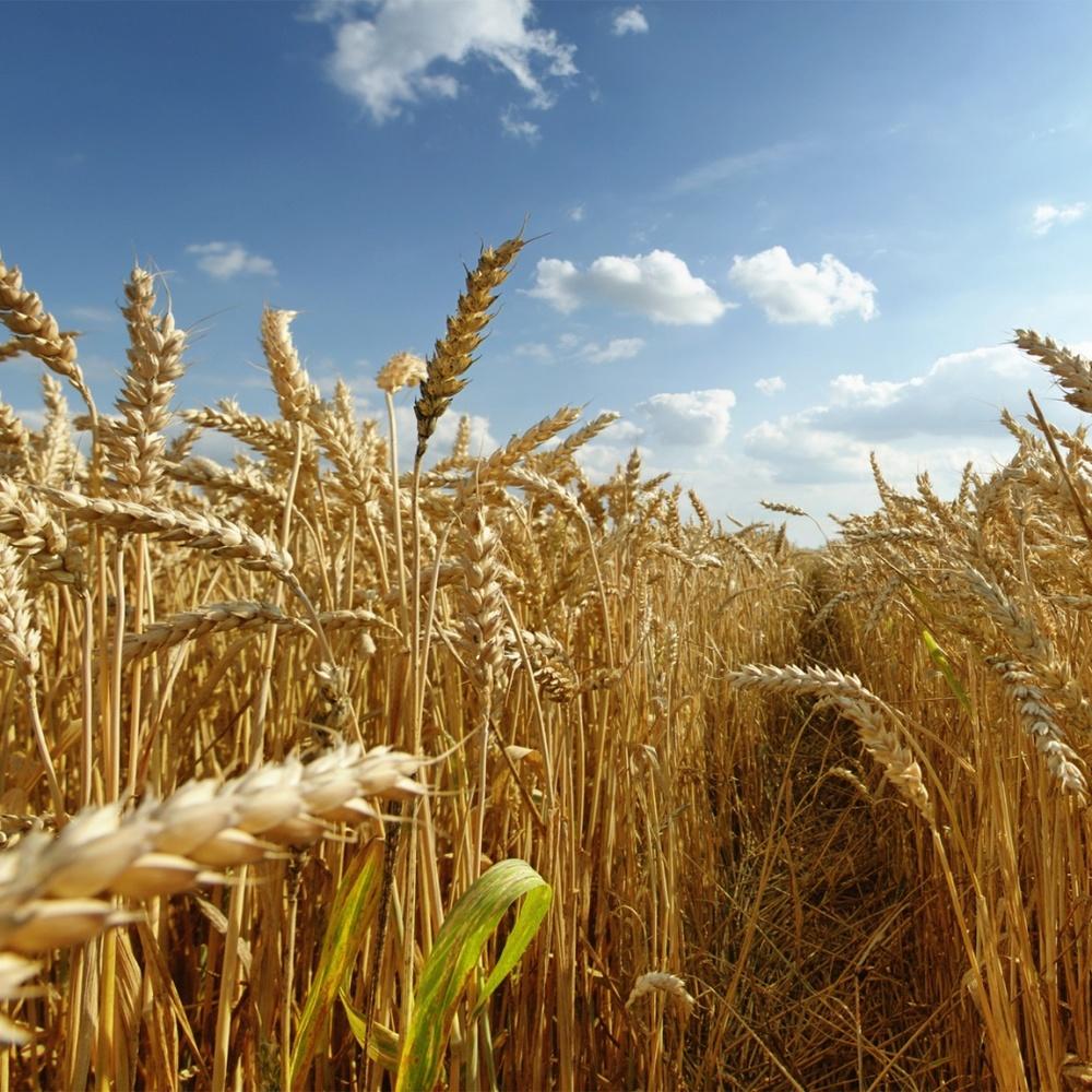 В Україні сьогодні місцями пройдуть дощі з грозами, температура до +34° (карта)
