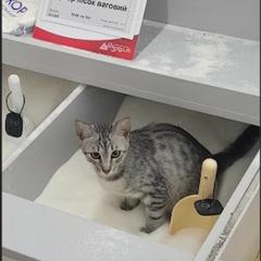 «Кішку впіймали» - у «Фуршеті» відреагували на відео з твариною у торговому залі