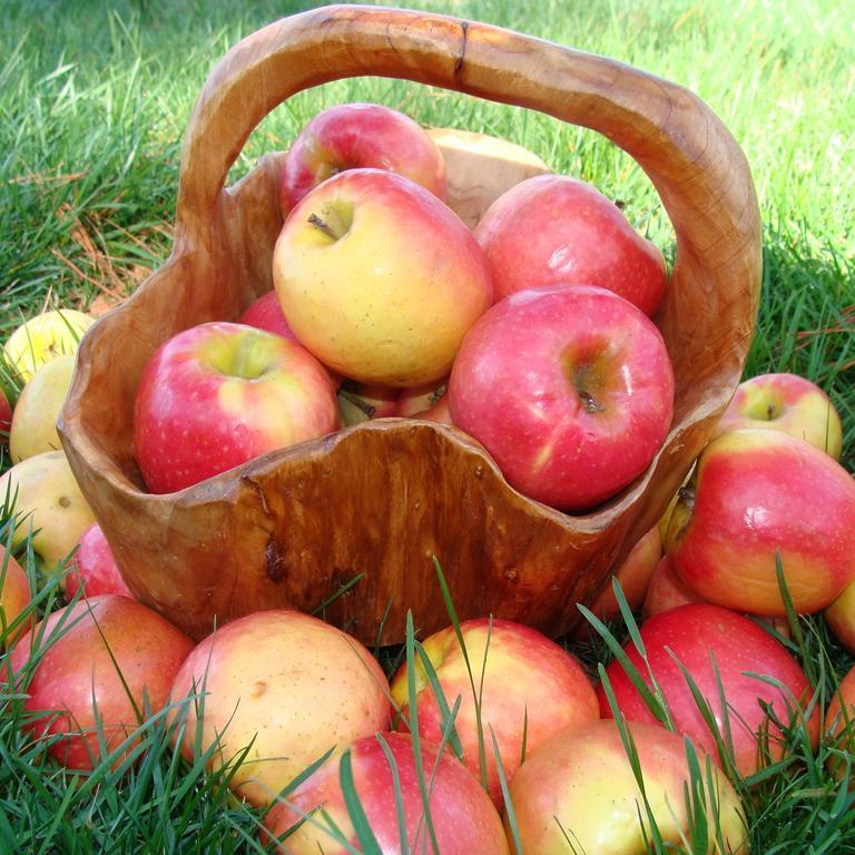 Україна збере найнижчий врожай яблук за останні 6 років